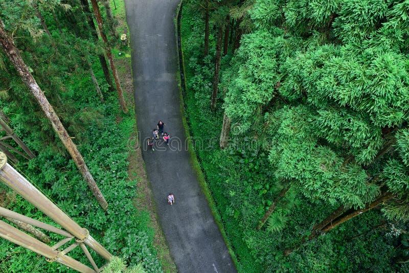 Туристы идя в лес стоковое фото rf