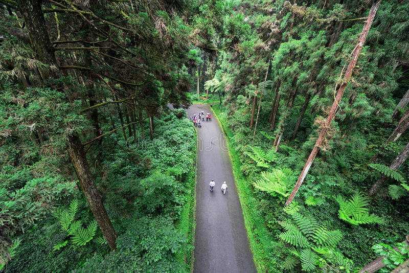 Туристы идя в лес стоковые изображения