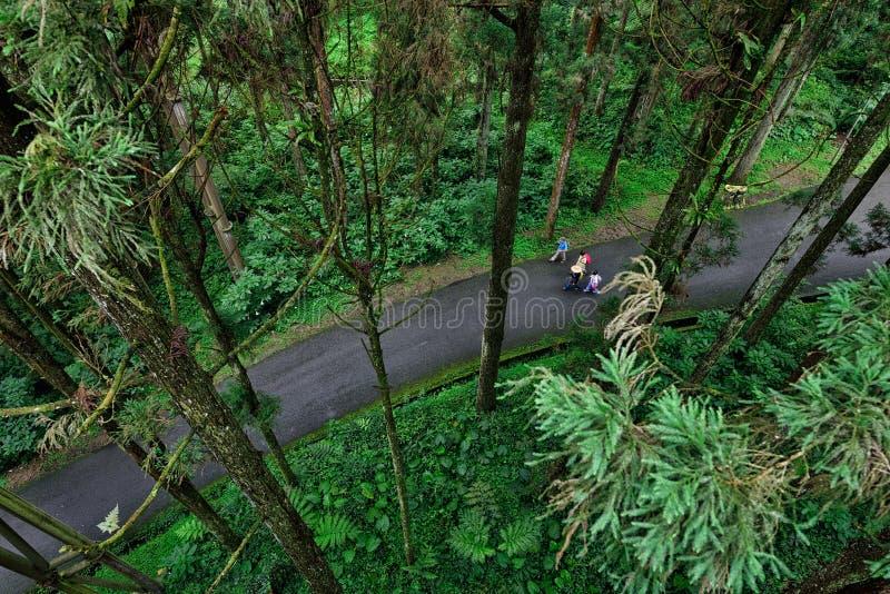 Туристы идя в лес стоковое изображение