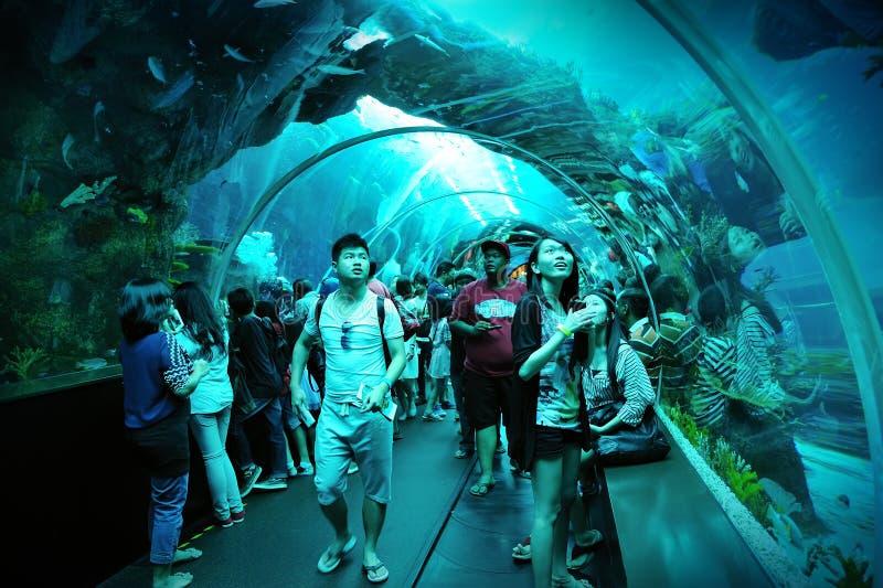 Туристы идя вдоль тоннеля в S.E.A. Аквариум стоковые изображения