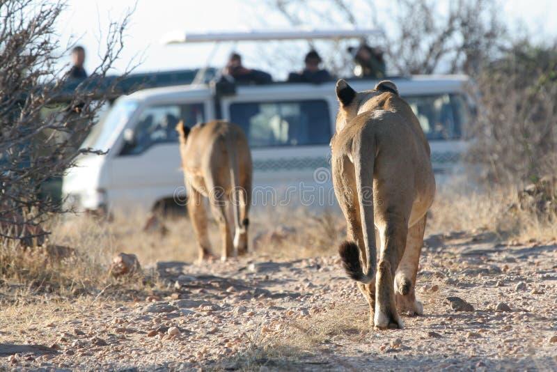 туристы львов стоковая фотография rf