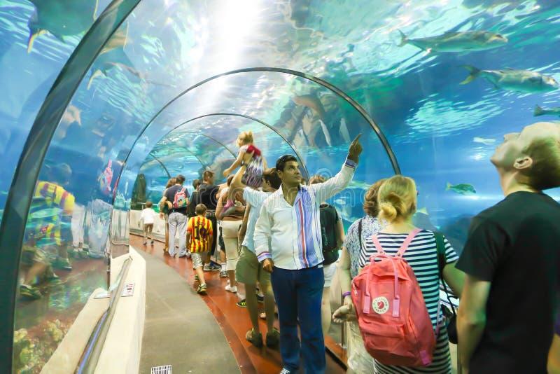 Туристы наслаждаются аквариумом стоковые фотографии rf