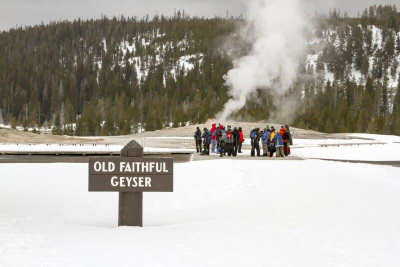 Туристы на старом верном гейзере, национальном парке Йеллоустона, Wyom стоковая фотография