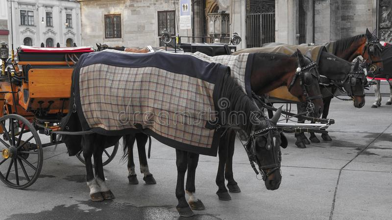 Туристы нося лошади и экипажа посещая вену Вена Wien прописной и самый большой город Австрии, и одно из sta 9 стоковая фотография