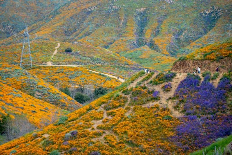 Туристы принимают фото и идут след на каньон ходока, восхищая wildflowers и стоковые изображения rf
