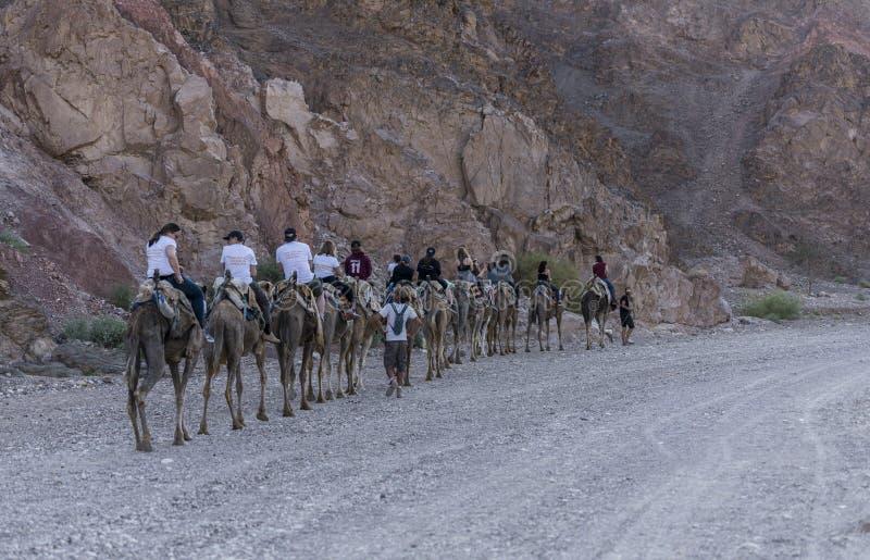 Туристы управляют на верблюдах стоковая фотография