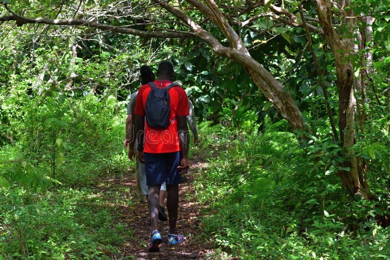 Турист в лесу Джозани Занзибар, Танзания, Африка стоковая фотография rf