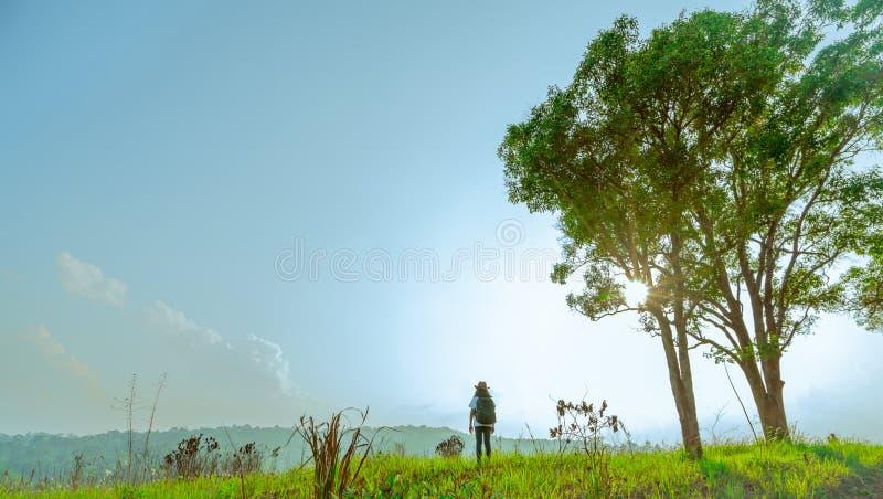 Турист молодой женщины с шляпой и рюкзак стоят на холме с полем зеленой травы и дереве пар большом на день солнечности стоковое изображение rf