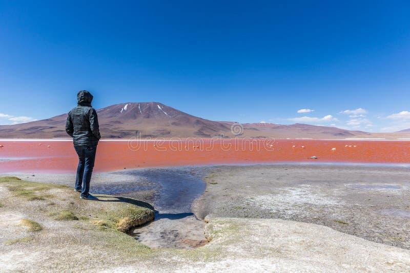 Турист наслаждаясь сюрреалистическим взглядом Laguna Колорадо в Боливии стоковые изображения rf