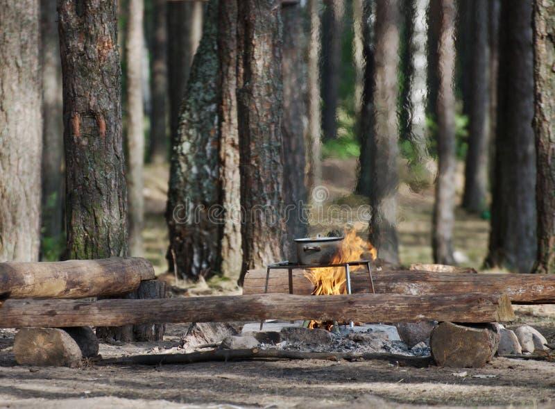 Турист обеда в сосновом лесе стоковая фотография