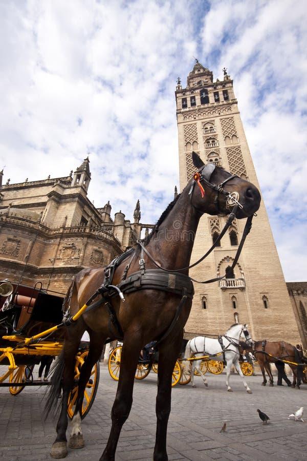 турист seville лошади экипажа стоковые фотографии rf