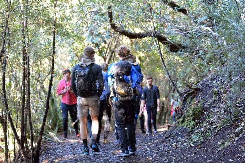 Турист trekking в острове Новой Зеландии Rangitoto стоковая фотография rf