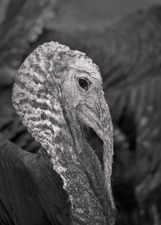 Турция стоковая фотография