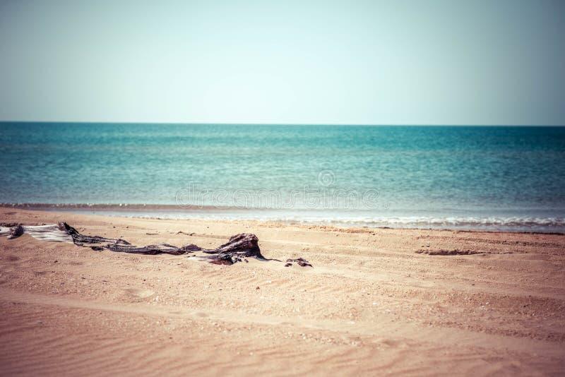Тухлое дерево на пляже стоковые фотографии rf
