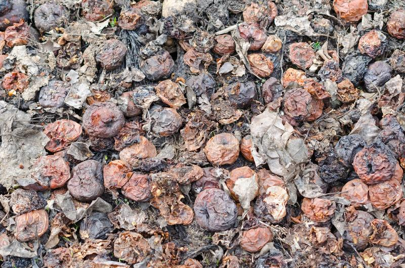 Тухлые яблоки Черная и коричневая текстура предпосылки стоковые фото