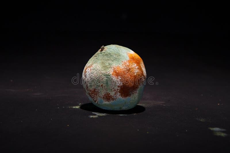 Тухлый апельсин на черной предпосылке Сломленный плодоовощ покрытый с зеленой прессформой стоковое изображение