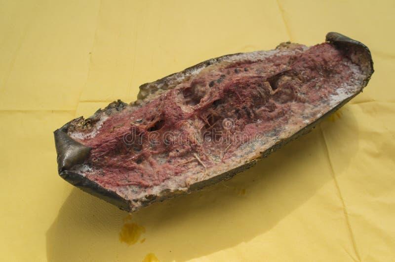 Тухлая концепция природы прессформы плохого запаха арбуза стоковое фото rf