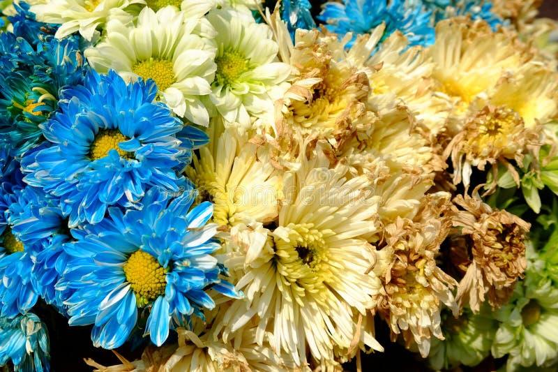 Тухлая предпосылка цветка стоковая фотография rf