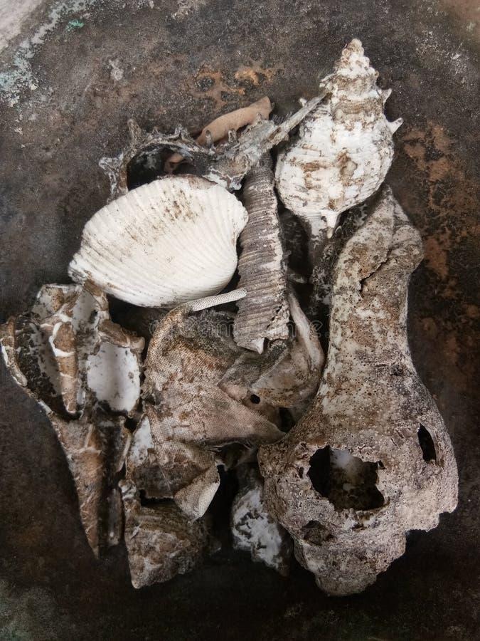 Туша моллюска стоковые фотографии rf