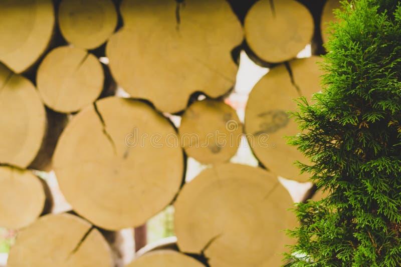 Туя на предпосылке загородки журналов стоковая фотография rf