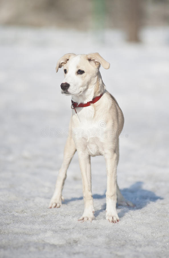 тщательно собака смотря снежок стоковые фото