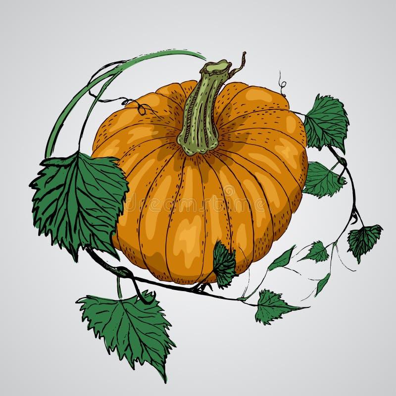 Тыква вектора вкусная и здоровая vegetable иллюстрация штока