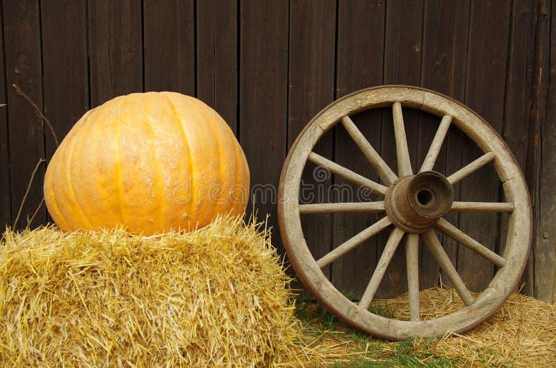 Тыква и колесо стоковое изображение