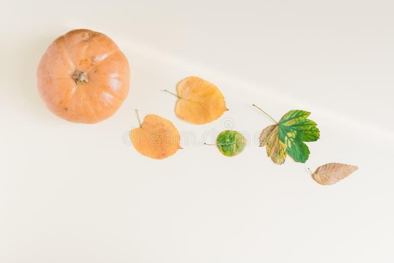 Тыква и пук сухих листьев на пастельном свете - желтой предпосылке стоковая фотография