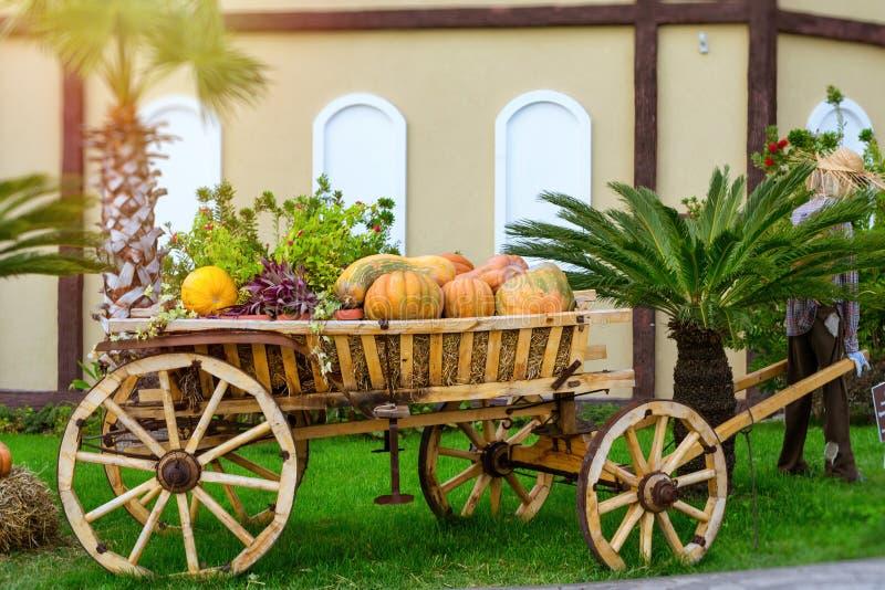 Тыква и цукини на хеллоуин стоковые фото