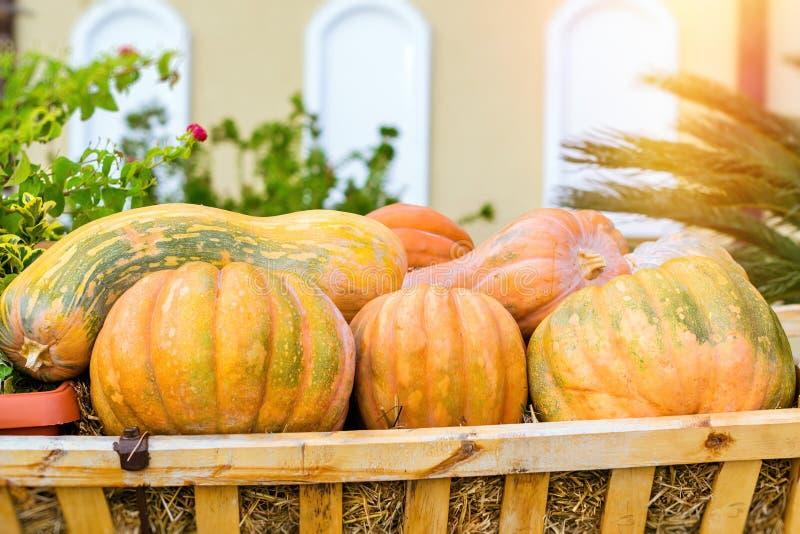 Тыква и цукини на хеллоуин стоковое изображение rf