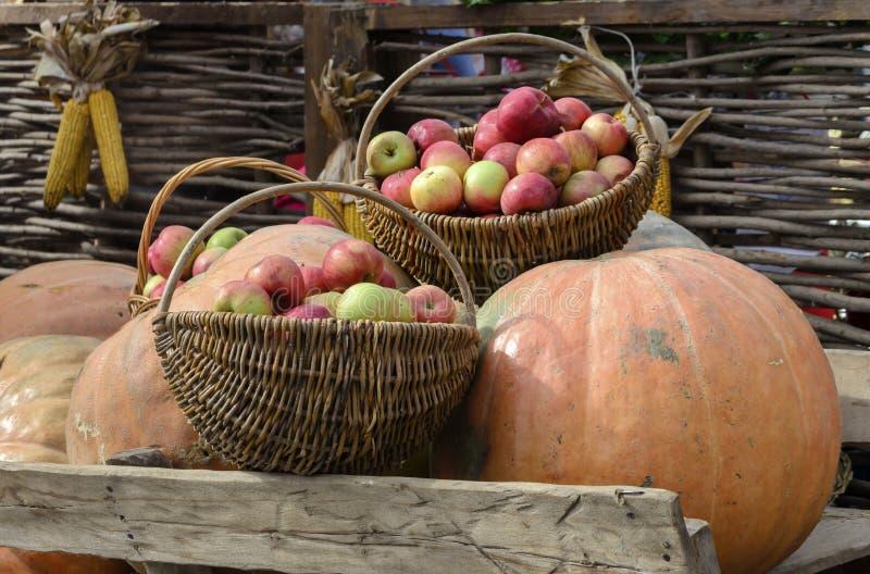 Тыква и яблоки сбора осени в корзине на предпосылке стоковые изображения
