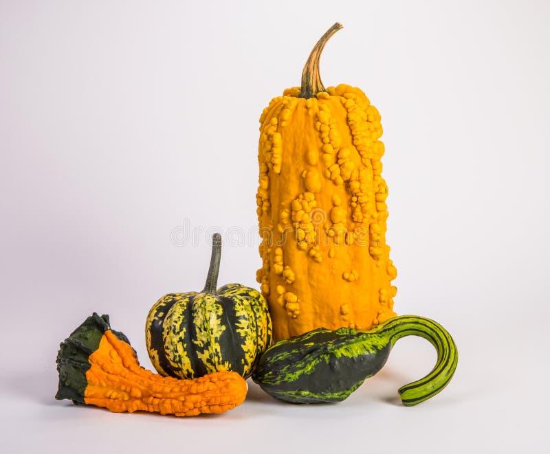 Тыква и Gourds стоковое изображение rf