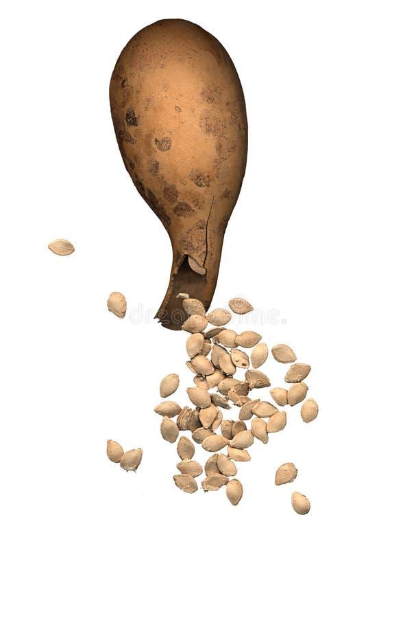 Тыква при семена разливая вне стоковые изображения