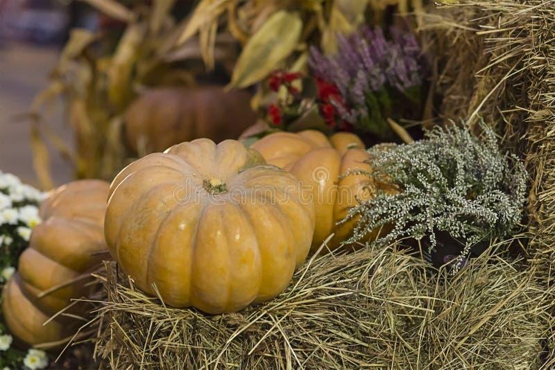 Тыква ребристого плодоовощ оранжевая на стоге сена с запачканной предпосылкой засаживает предпосылку стоковые фотографии rf