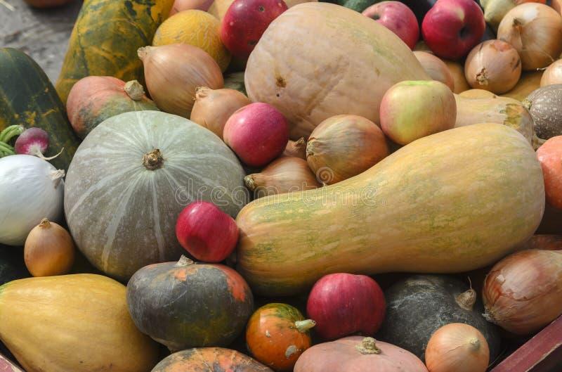 Тыква сбора осени, яблоки, луки, огурцы, редиски стоковое фото rf