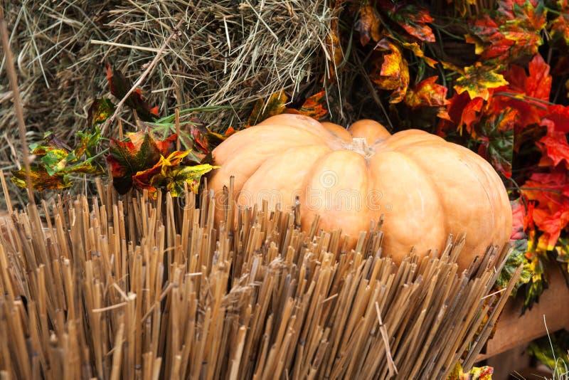 Тыква, сено, солома стоковое изображение
