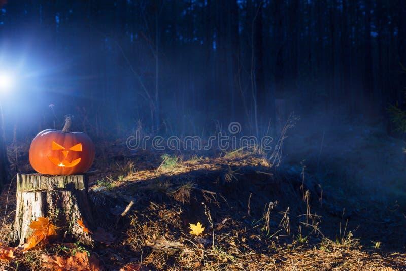 Тыква хеллоуина в лесе ночи стоковые фотографии rf