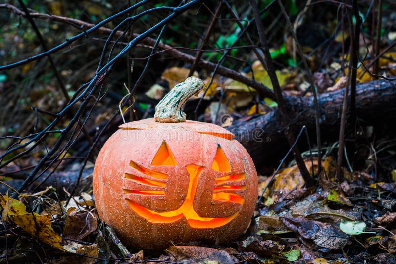 Тыква хеллоуина в лесе осени стоковое изображение
