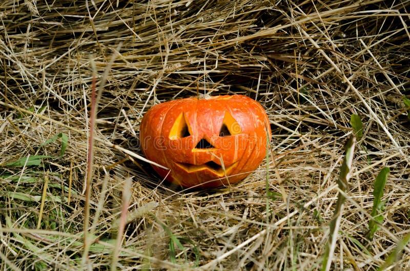 Тыква хеллоуина на предпосылке сена страшный поднимите голову домкратом западная американская традиция r стоковые фото