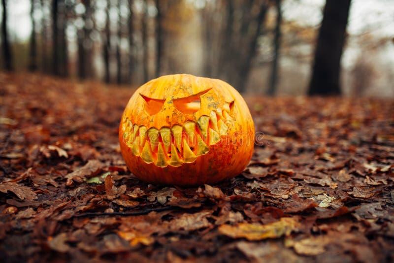 Тыква хеллоуина страшная в предпосылке тыквы леса одного осени стоковые фото