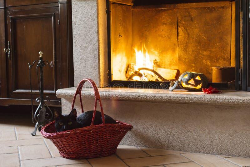 Тыква черного кота, хеллоуина и конфета около огня стоковые фото