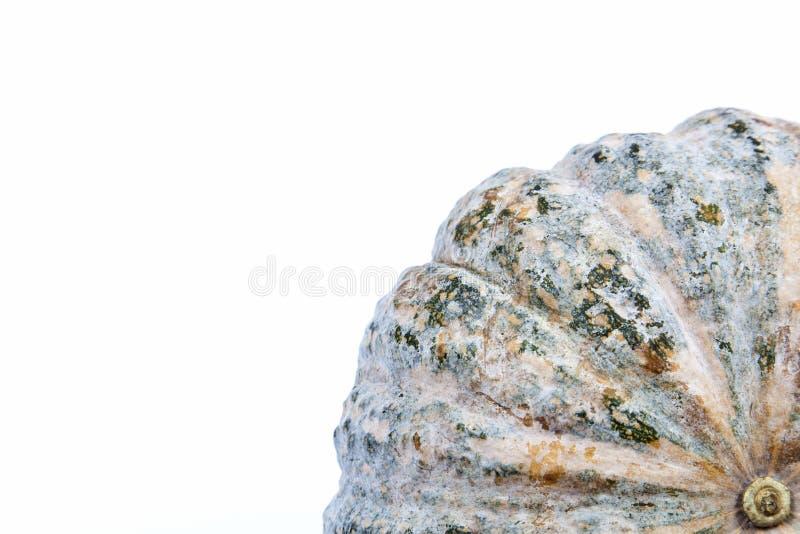 Тыква стоковое изображение