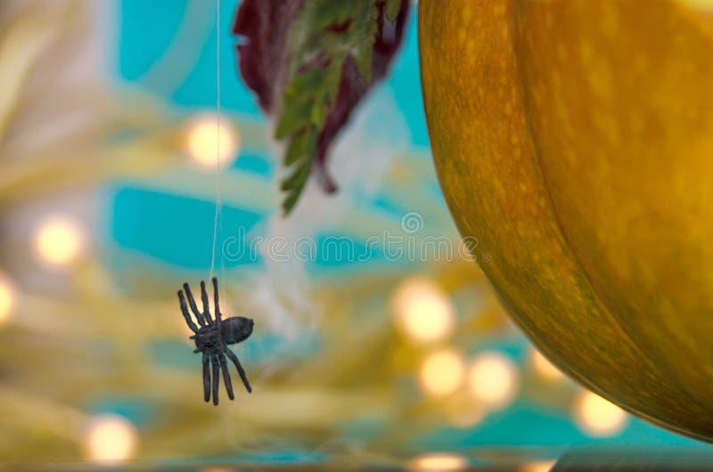 Тыква Halloween с спайдером стоковые фотографии rf