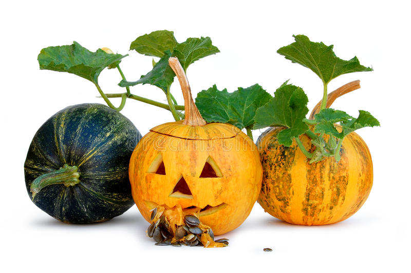 тыква halloween стоковые изображения rf