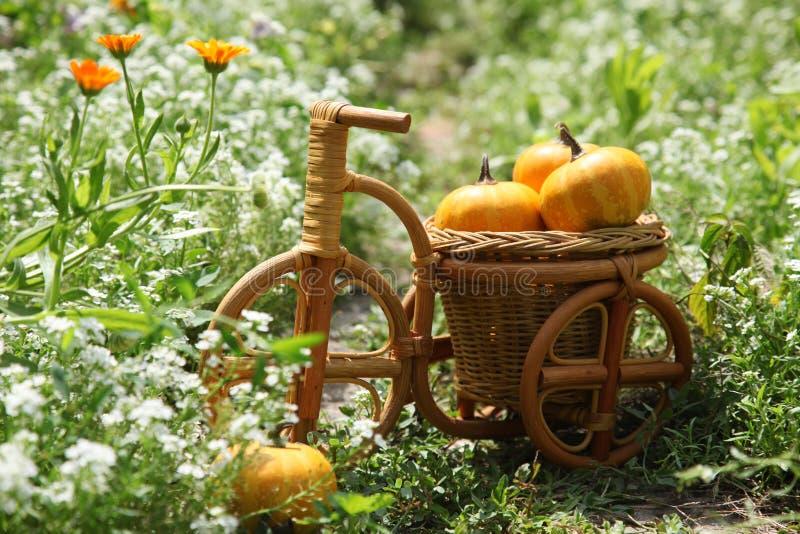 Тыквы в сплетенной корзине в форме велосипеда стоковые изображения rf