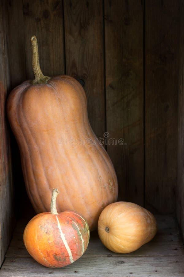 Тыквы и сквоши различных разнообразий в деревянной коробке крупный план предпосылки осени красит красный цвет листьев плюща помер стоковое фото rf