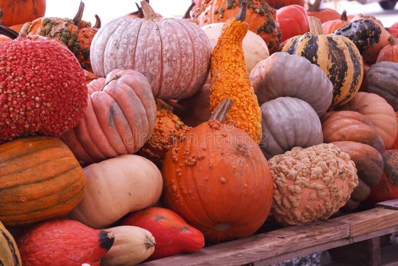 Тыквы и Gourds стоковая фотография rf