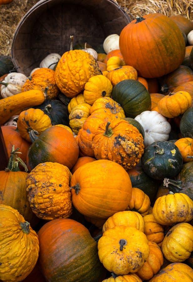 Тыквы и Gourds стоковое изображение