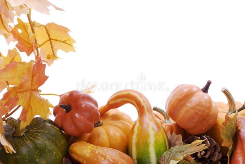 тыквы листьев gourds падения
