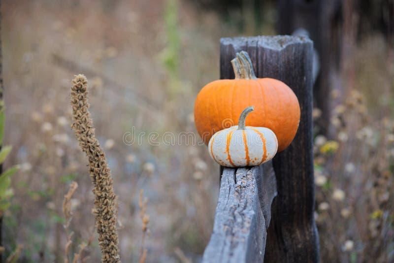 2 тыквы на деревянной загородке стоковое фото